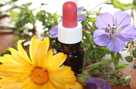 Descubra Como Funciona A Terapia Floral